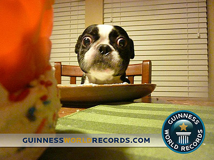Bug-Eyed Dog Sets World Record for Largest Eyes