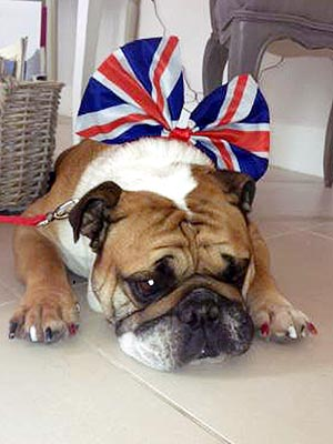 Animals Celebrate Queen's Diamond Jubilee