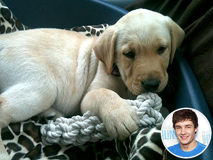Liam Payne Gets Puppy: Photo