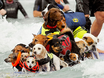 Dogs Break World Record at Surfing Competition