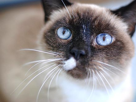 Adopt Me! Senior Cat Tinkerbell Still Has Spunk