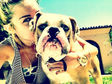 Miley Cyrus Tweets Pool Photo of Dog Ziggy