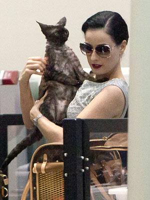 Dita Von Teese's Cat Travels in Louis Vuitton