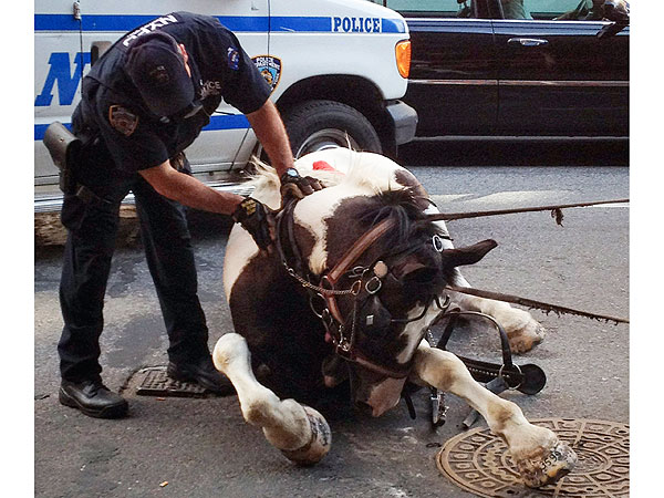 Carriage Horse in New York Injures Driver and Two Passengers