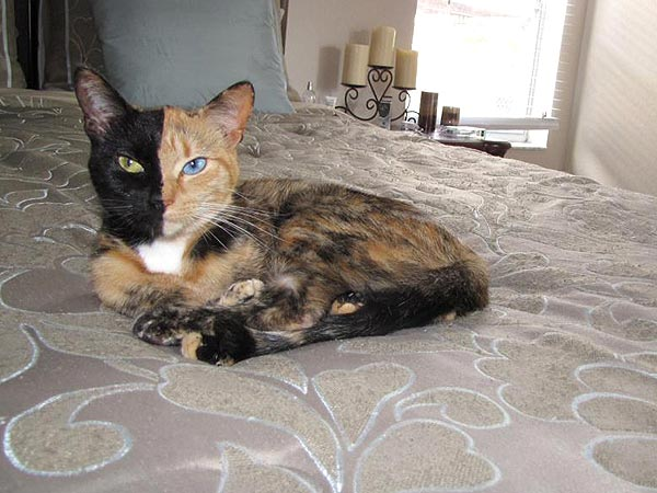 Meet Venus, the Two-Faced Cat