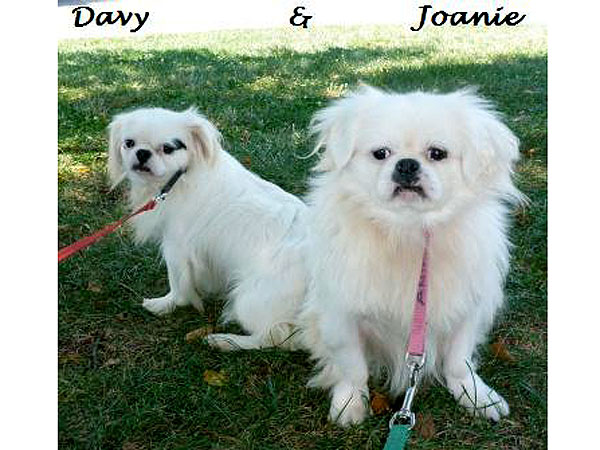 Adopt Me! Joanie & Davy Love Life Outside the Cage