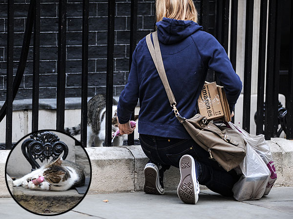 Larry the 10 Downing Street Cat Gets Toy from Stranger
