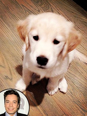 Jimmy Fallon Gives His New Puppy a Shoutout on Emmys Red Carpet