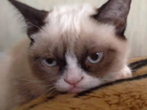 Tard the Grumpy Cat Is Donating to Charities