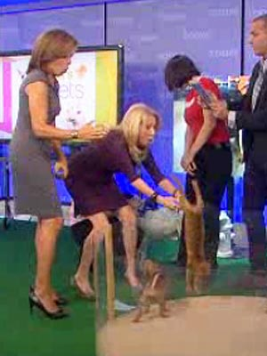 Kathie Lee Gifford Drops Puppy on TV, Is a &#39;Wreck&#39;