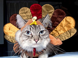 Show Off Your Thanksgiving Pets!