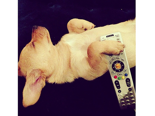 Lauren Conrad's Dog Pre-Games for Thanksgiving Laziness