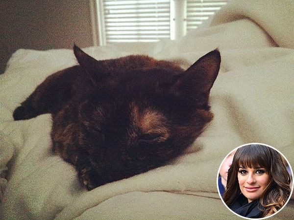 Lea Michele: My Cat Is the 'Perfect Companion'