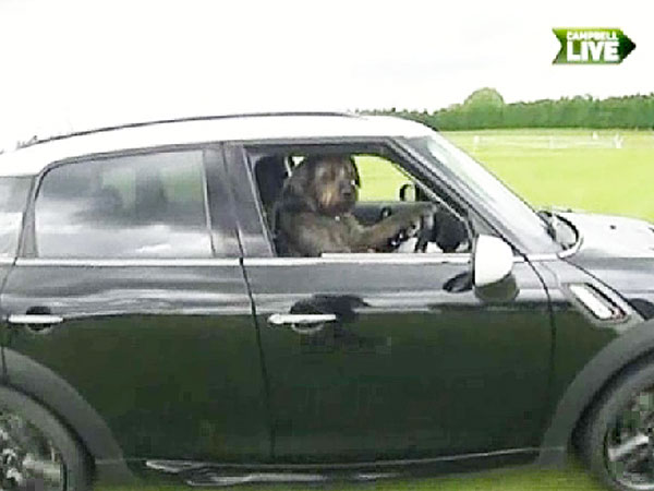 Rescue Dogs in New Zealand Learn How to Drive