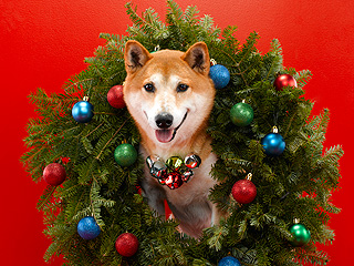 Show Us Your Holiday Pets!
