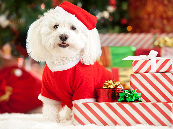Holidays 2012: Pets Aren't Christmas Gifts