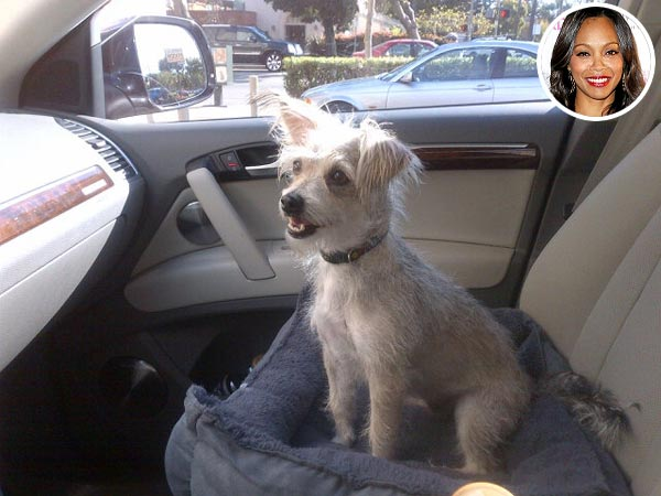 Zoe Saldana Adopts a Dog: Photo