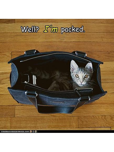 PHOTOS: Cats in Your Stuff
