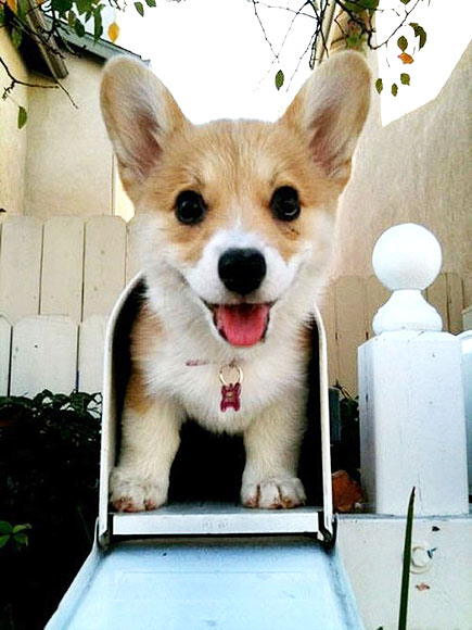 PHOTOS: Can We Talk About Corgis Some More, Please?