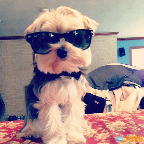 The Cutest Pets on Twitter This Week!