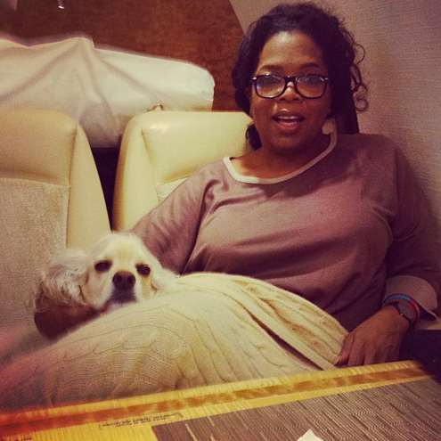 Oprah's Favorite Things: Her Dogs!