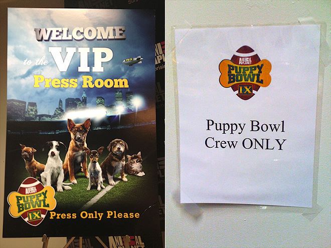 Puppy Bowl IX: PEOPLE Goes Behind the Scenes