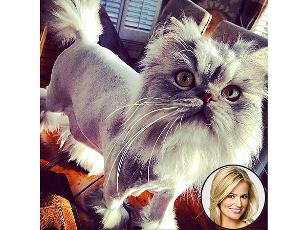 Emily Maynard's Cat Gets a Haircut – Like a Lion!