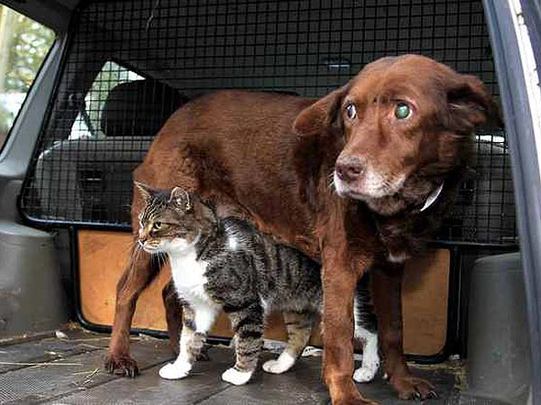 Blind Dog Takes Walks with a Guide Cat