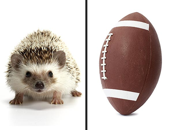Puppy Bowl 2013 to Use Hedgehogs as Cheerleaders
