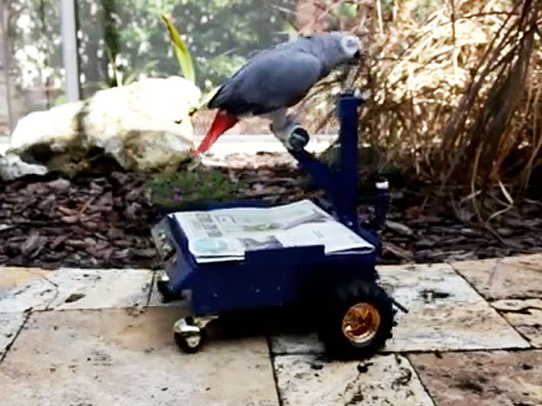 Man Builds Car for Pet Parrot