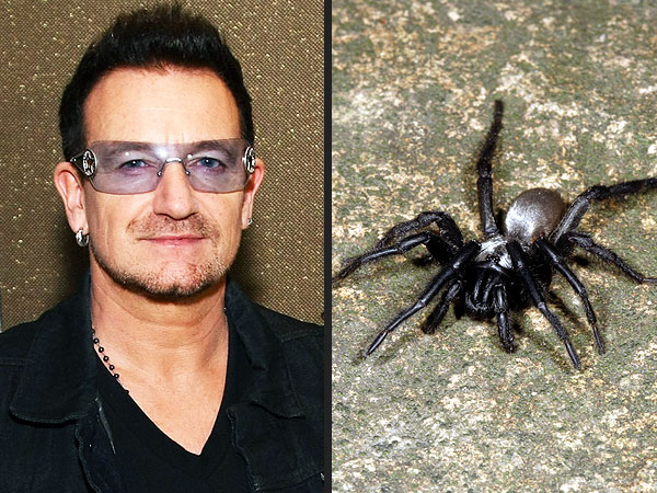 Biologist Names New Spider Species After Bono