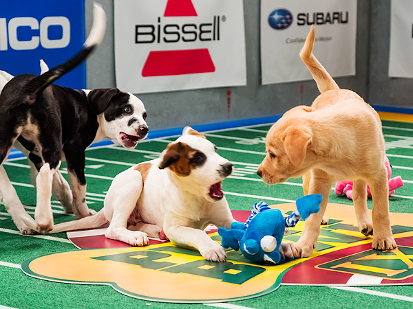The Water Bowl: How the MVPs of the Puppy Bowl Make the Cut