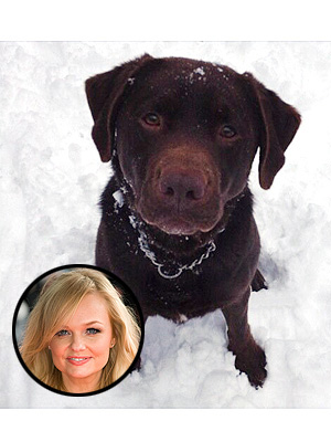 Emma Bunton's Missing Dog Phoebe Has Died