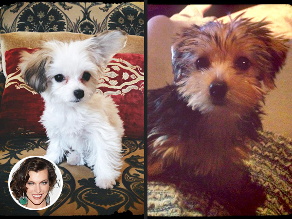 Milla Jovovich Brings Home Two Puppies