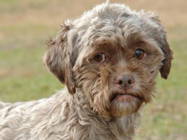 Dog With Human Face Named Tonik Up For Adoption