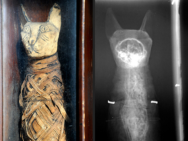 English Bed & Breakfast Owner Finds Mummified Cat Egyptian Artifact