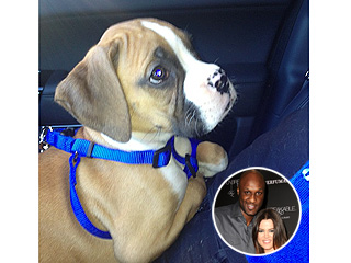 Lamar Odom Gets Khlo&#233; Kardashian a Puppy | Khloe Kardashian, Lamar Odom