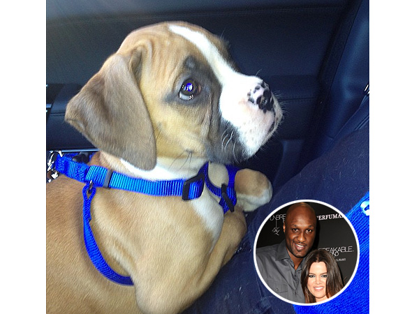 Khloe Kardashian, Lamar Odom Puppy Photo