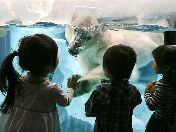Ueno Zoo Polar Bear: Photo