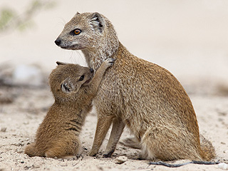 The Daily Treat: Mongoose Thinks You Should Hug Your Mom More Often
