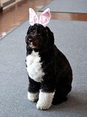 Bo Obama Channels Easter Bunny Before White House Egg Roll