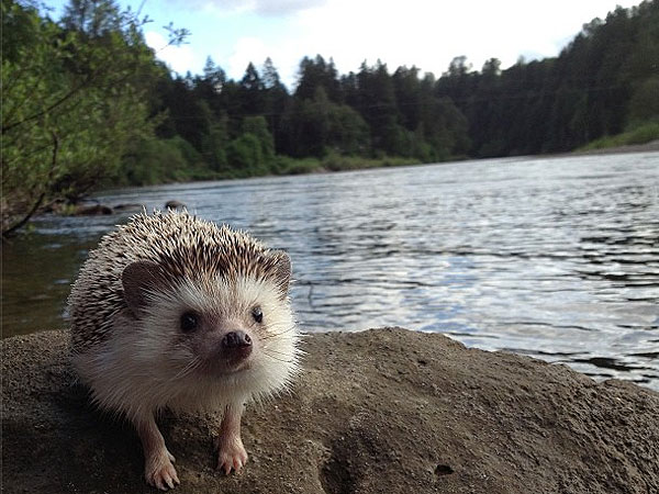 Biddy the Hedgehog on Instagram: Photos
