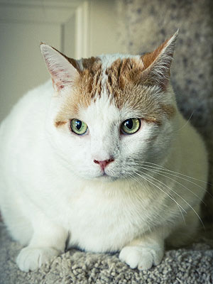 Adopt Me! Once a Fearful Stray, Jules Is Now Sweet and Social