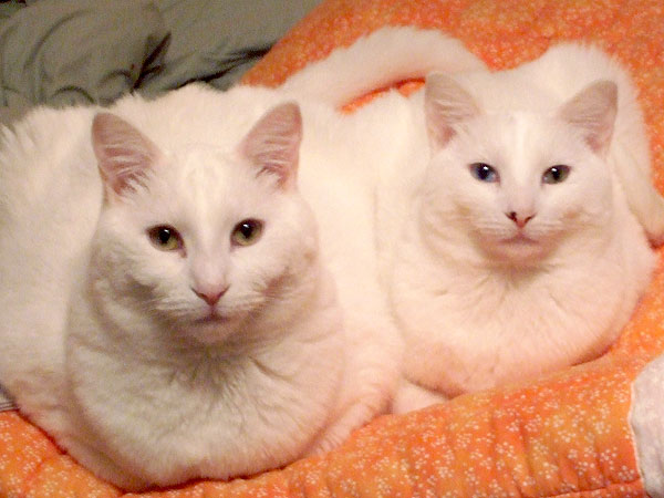 Adopt Us! Siblings Frio & Stardust Rely On Each Other