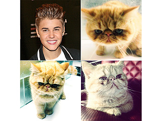 The Daily Treat: The Three Cutest Photos of Justin Bieber's Cat | Justin Bieber