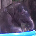Video: Baby Elephant Makes Most of Childhood in Texas Zoo