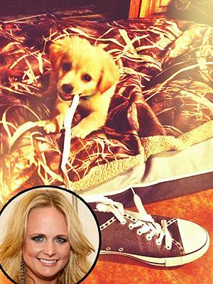 Miranda Lambert's Dog Chews on Her Shoe, Blake Shelton