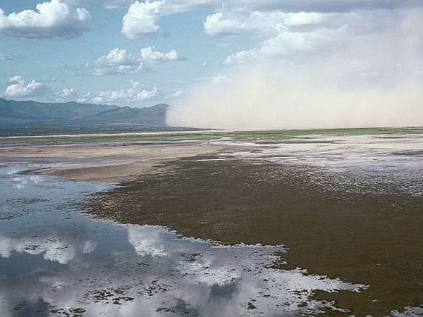 Lake Natron Turns Animals to Stone ... Really!