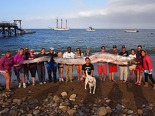 18-Foot Oarfish Found Off the Coast of California