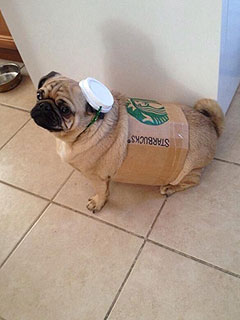 The Daily Treat: Pour Yourself a Pugkin Spice Latte